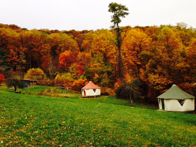 Fall foliage colors from the nearby forest are echoed in the colorful roofs of a pair of tiny homes