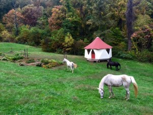 Horses grazing in a hillside pasture with a small Yome tent house in the background