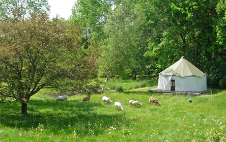 Sheep grazing near a tiny tent home Yome by Red Sky Shelters in North Carolina